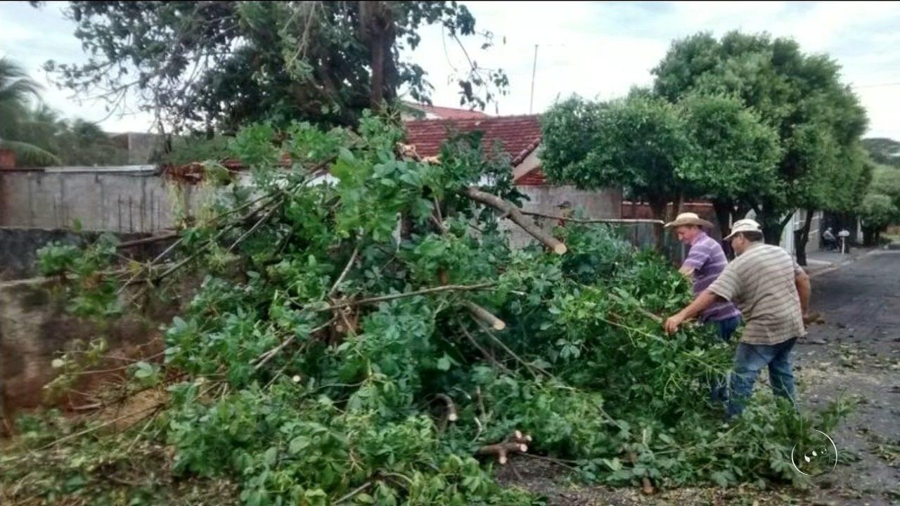 Vento arranca árvores e destelha casas em General Salgado