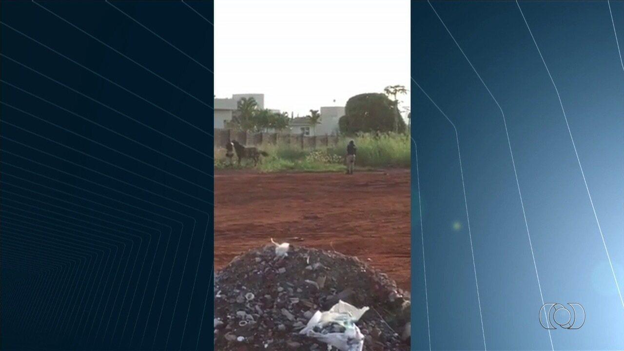 Policiais matam cavalos às margens da BR-060, em Rio Verde
