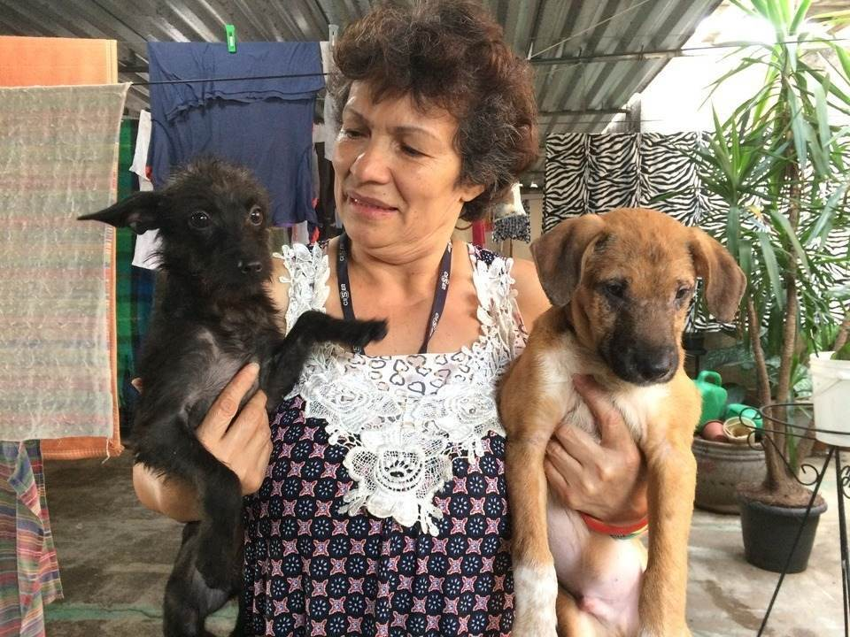 Protetora resgata cães na Cracolândia