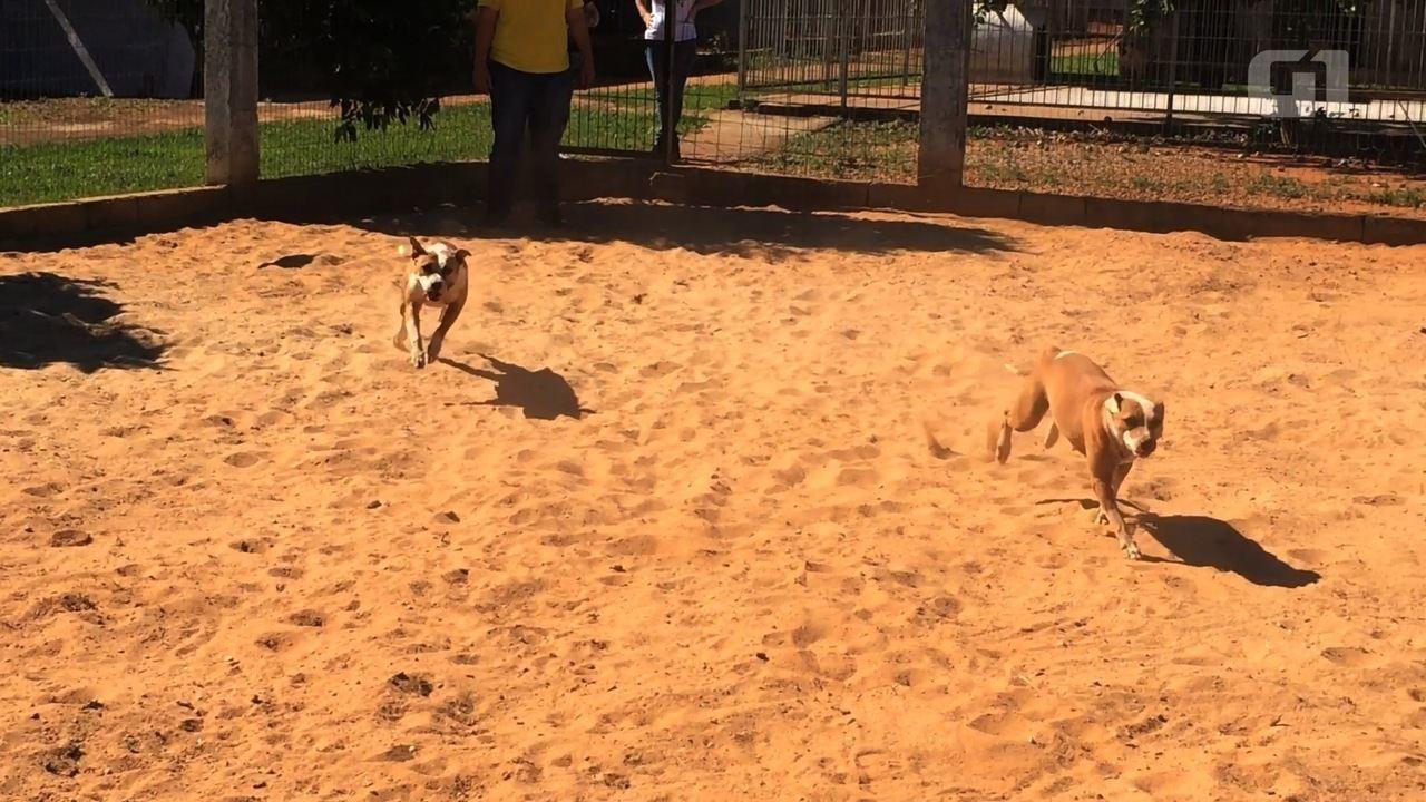 Recanto dos Pit Bulls precisa de doações para cuidar de cães abandonados