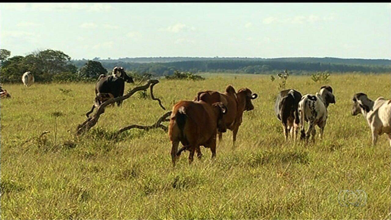 Produtor rural teve 42 cabeças de gado furtadas na região sudoeste de Goiás