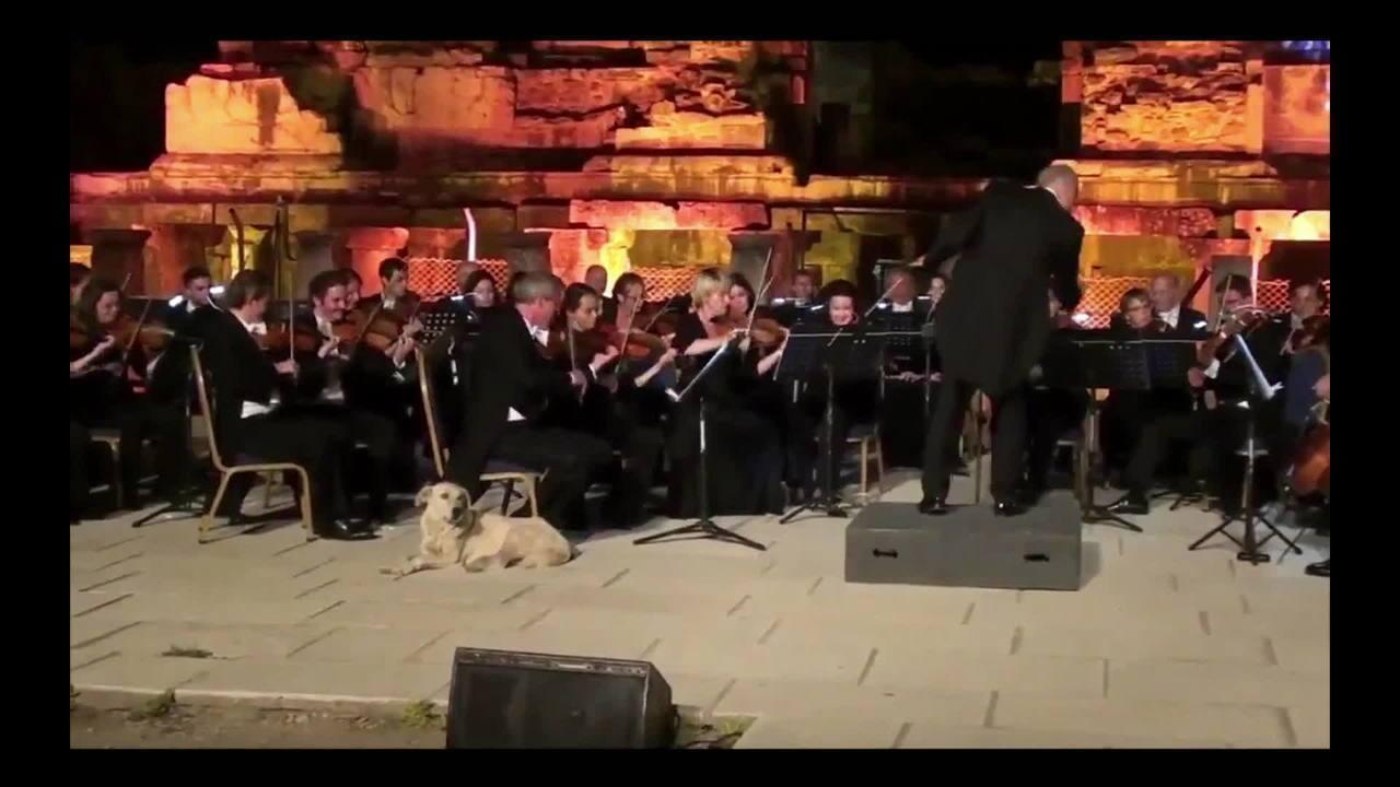 Cachorro rouba a cena ao invadir apresentação da Orquestra de Viena e deitar