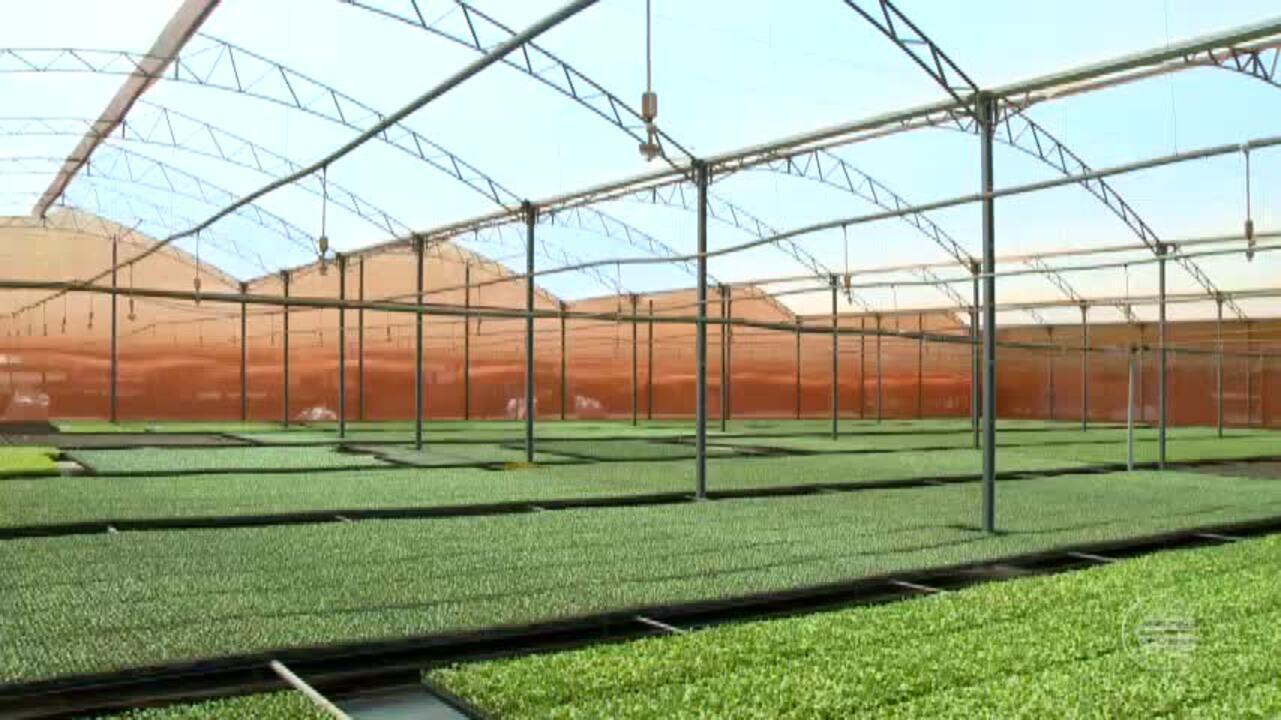Produção de melão avança no Piauí com manutenção de vegetação nativa