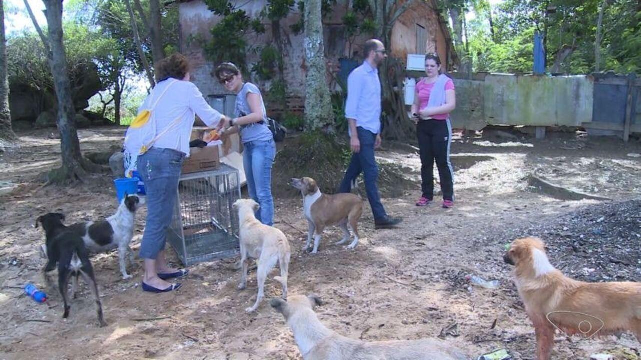 Cachorros são abandonados sem água e comida em ilha de Vitória