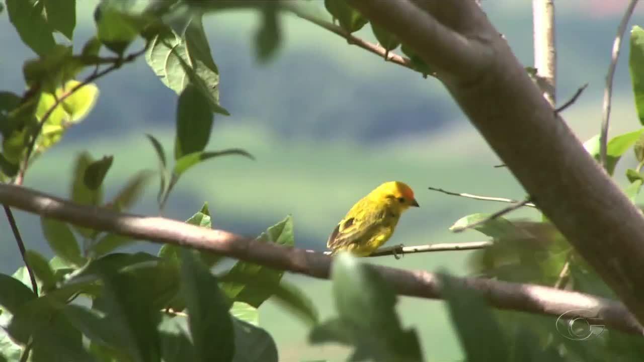 Mais de 100 animais silvestres são soltos em área de proteção ambiental