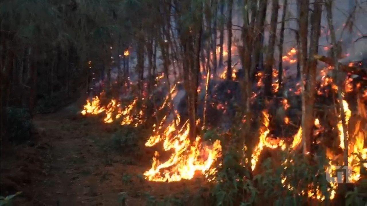 Incêndio atinge mata e queima 20 hectares na Serra do Japi em Jundiaí