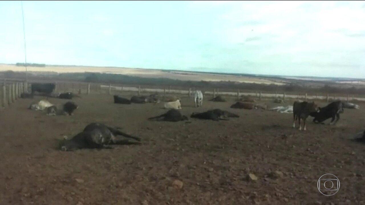 Defesa sanitária do Mato Grosso do Sul investiga morte de mil cabeças de gado