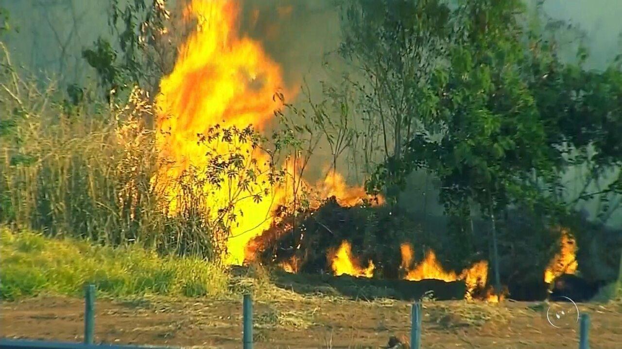 Incêndio atinge área do antigo IPA em Rio Preto