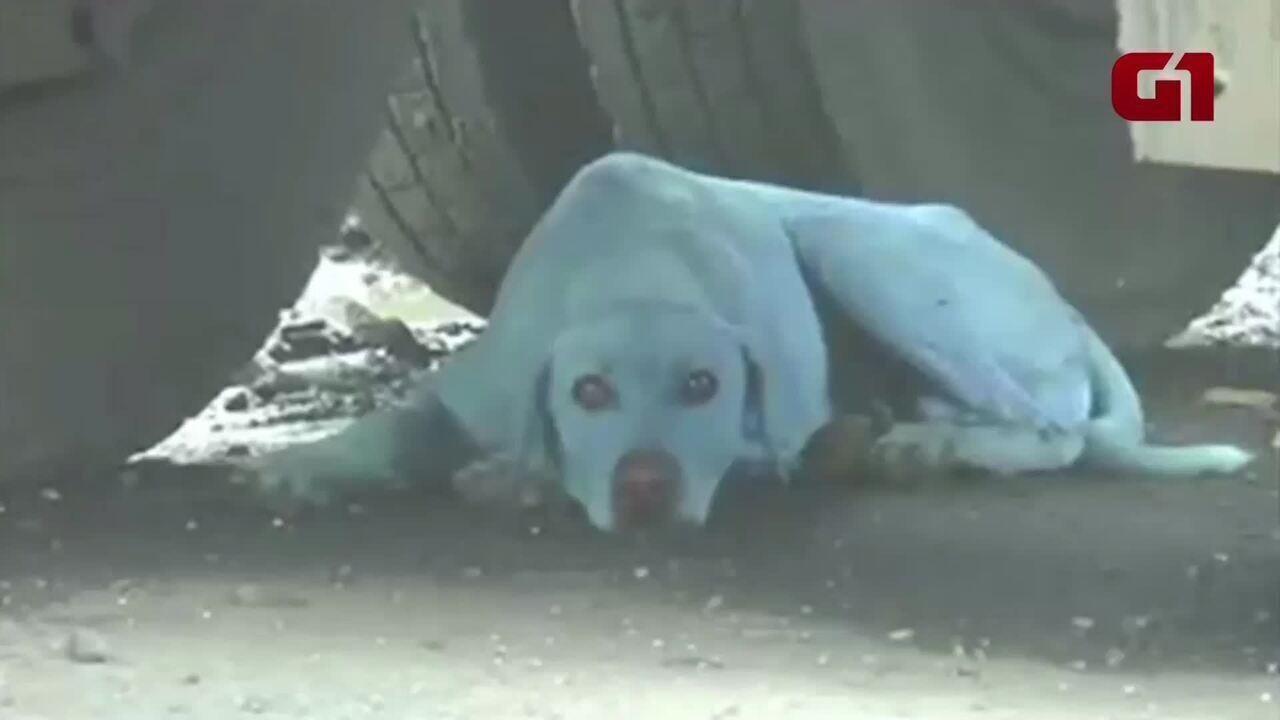 Cachorros ficam azuis ao entrar em rio poluído na Índia