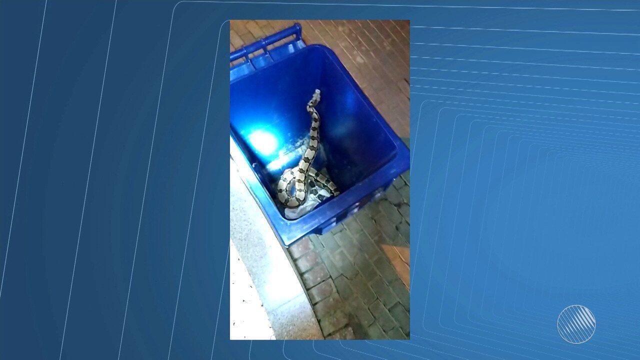 Cobra de 2 metros é encontrada na entrada de prédio na Vila Laura, em Salvador