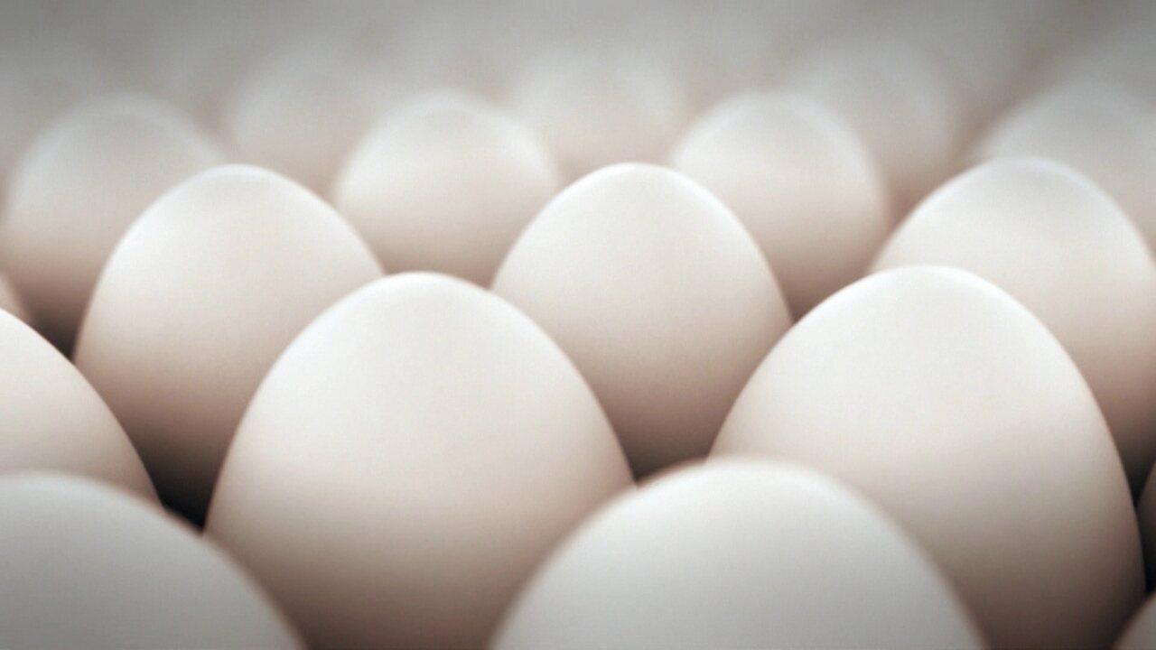 Brasil chega a 39 bilhões de ovos produzidos em 2016