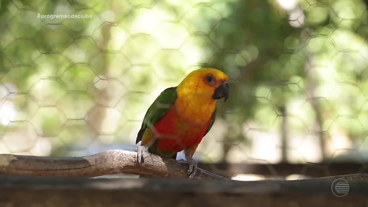 Conheça o pássaro símbolo da capital Teresina: Jandaia Sol