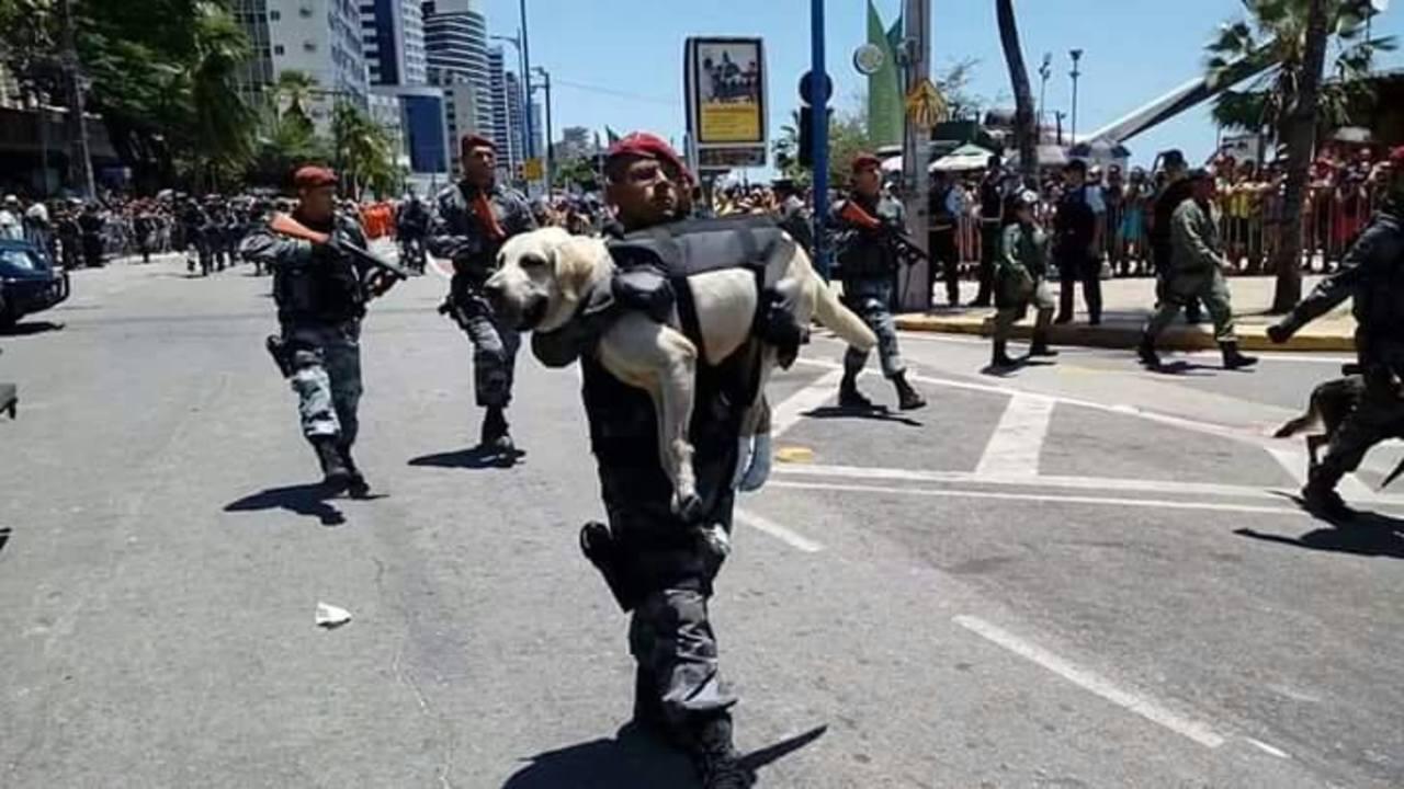 Policial ganha elogios após carregar cachorro nos braços durante desfile da Independência