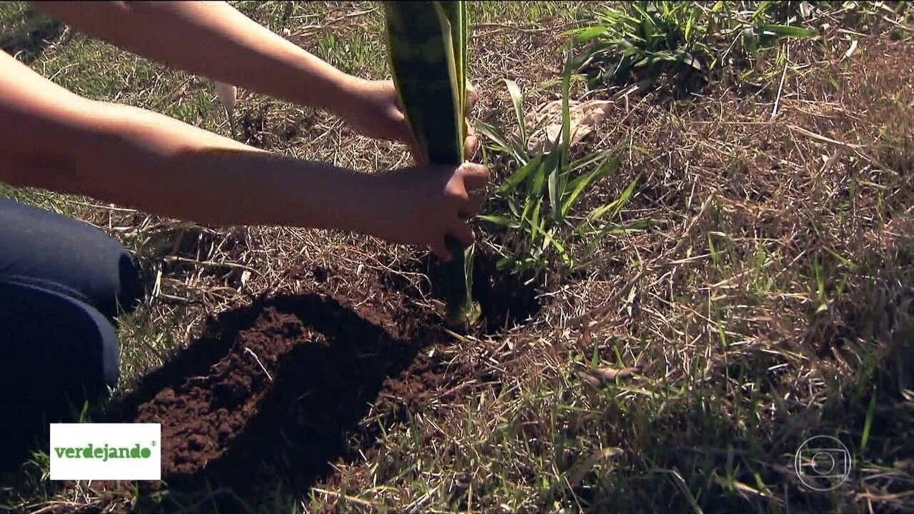 Mutirões de plantio do Verdejando começaram por Guarulhos