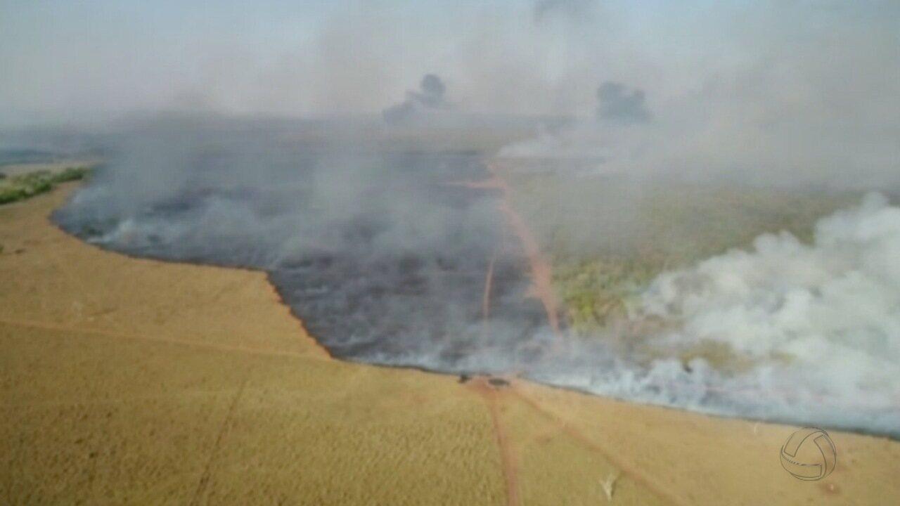 Fazendas de Ribas do Rio Pardo voltam a ficar em chamas