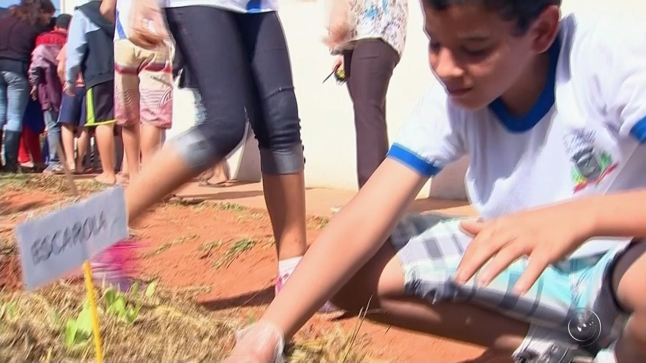 Horta em escola de Rio Preto garante conhecimento interdisciplinar de alunos