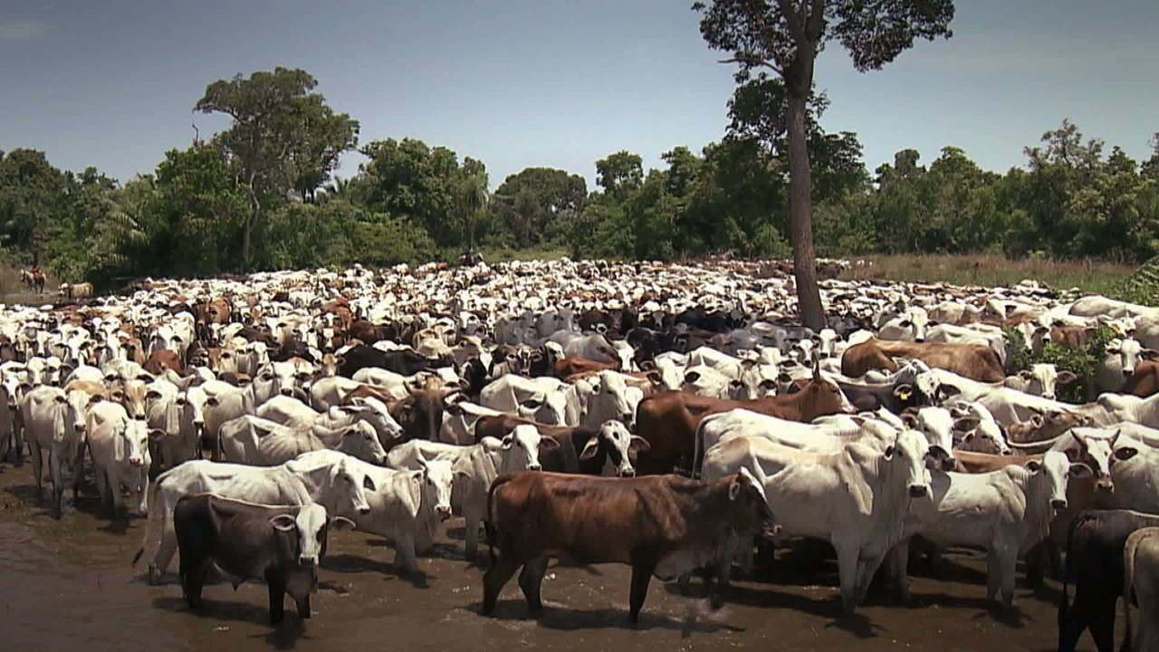 Brasil é maior exportador de carne bovina do mundo