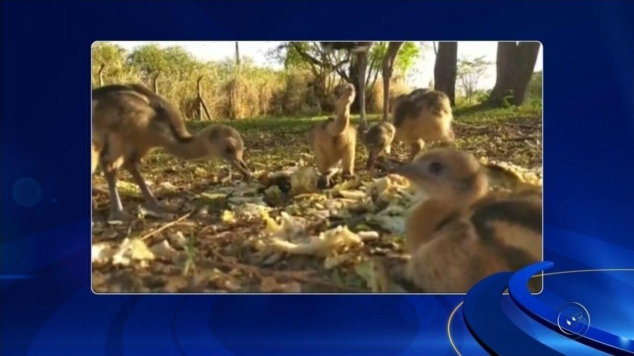 Zoológico de Araçatuba ganha emas após nascimento de filhotes