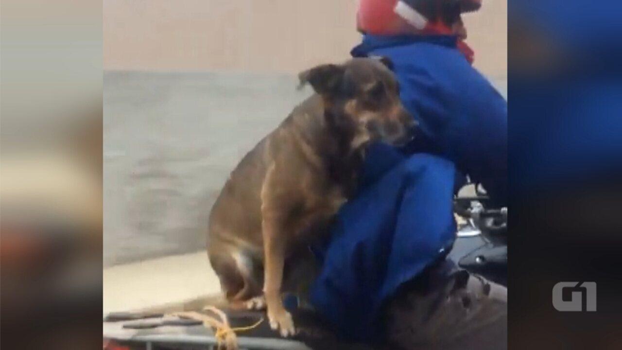 Vídeo mostra motociclista com cachorro na garupa de moto