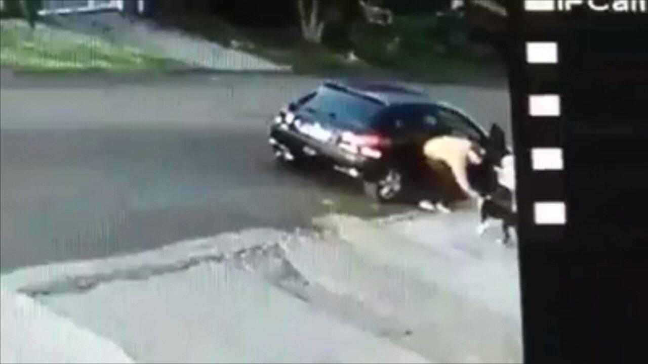 Vídeo flagra homem roubando cachorro em Chapecó