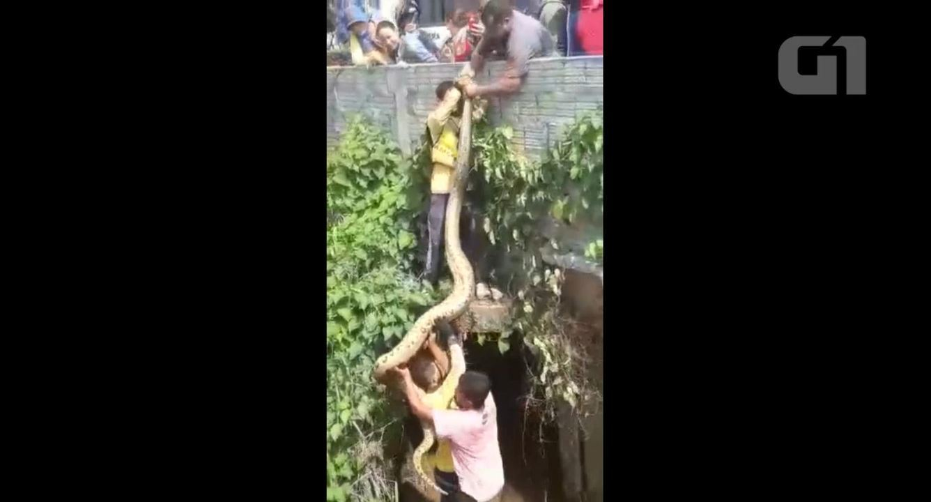Sucuri é resgatada após ser agredida por moradores em RO
