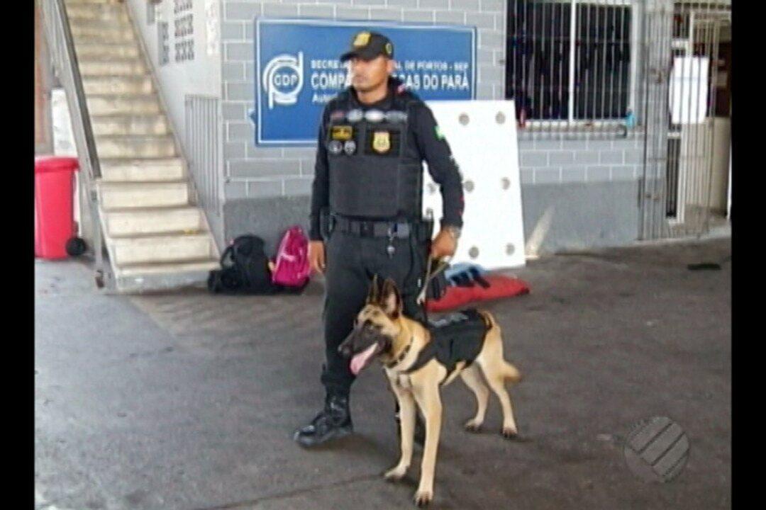Cães da Guarda Portuária são treinados para o combate ao tráfico de armas e drogas