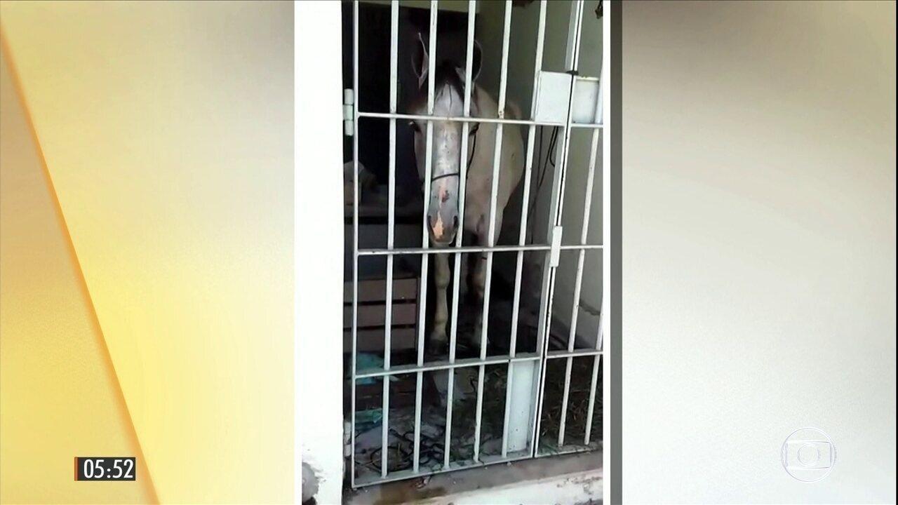 Cavalo é detido após dar um coice em um carro durante cavalgada em SE