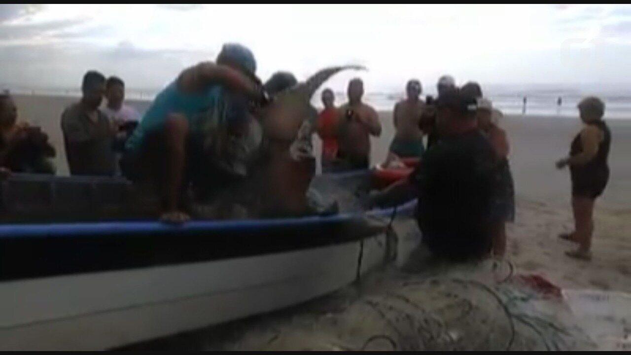 Pescador pesca tubarão em praia da Praia Grande, no litoral de São Paulo