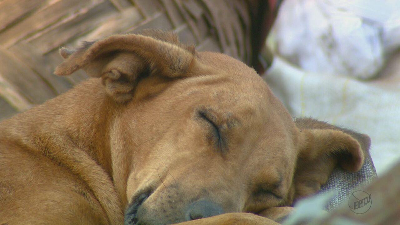 Cadela que levava marmita para outros animais morre em São Carlos, SP
