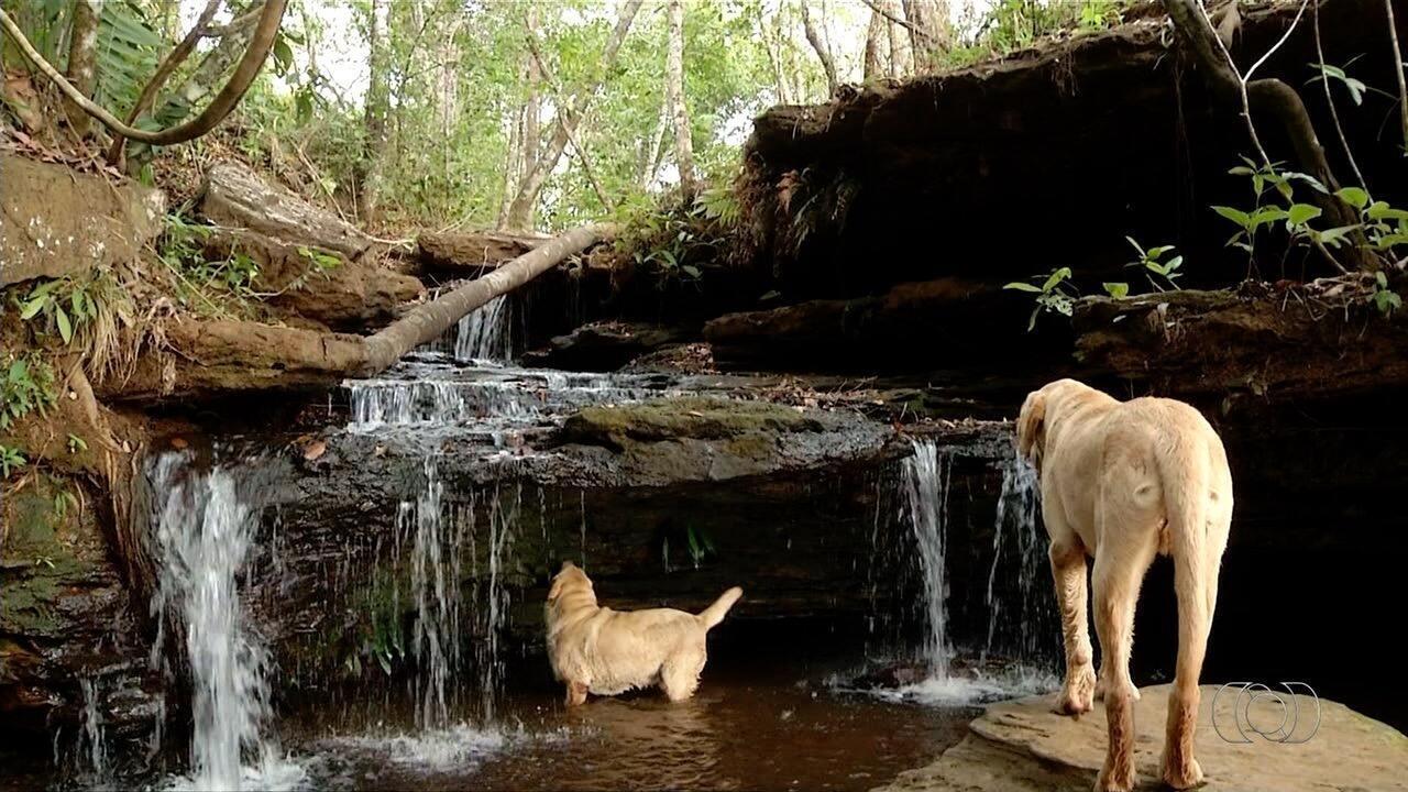 É o Bicho mostra cachorros que são guias turísticos em cachoeira de Taquaruçu