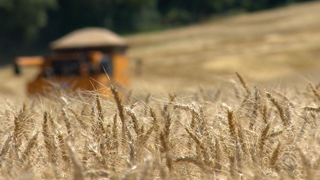 Mesmo com safra de inverno ruim, agricultores se mantêm otimistas