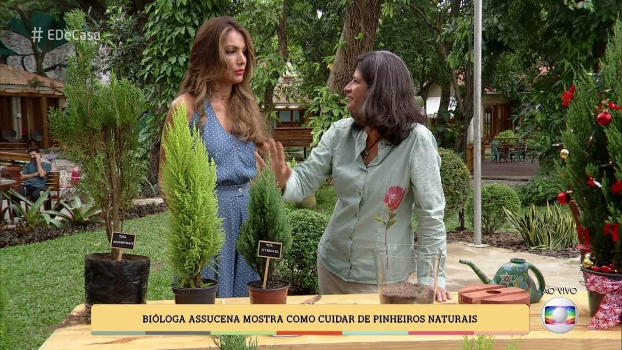 E De Casa Biologa Mostra Como Cuidar De Pinheiros Naturais