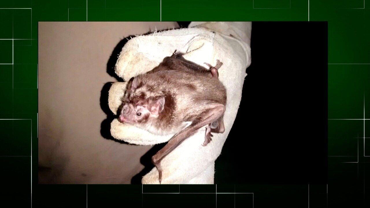 Inter TV Rural relembra entrevista que fala da captura de morcegos em Casimiro de Abreu