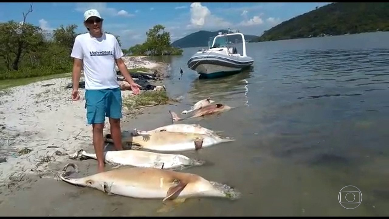 Pesquisadores alertam para uma mortandade em massa de botos na Baía de Sepetiba