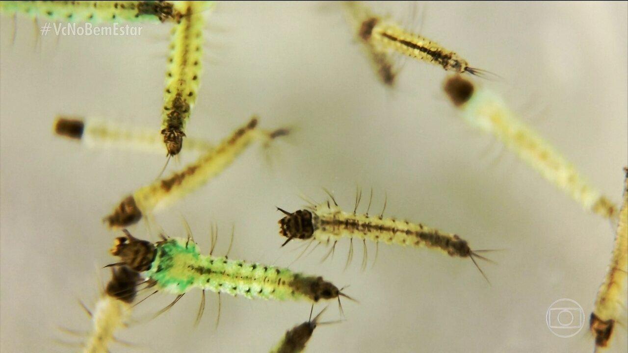 Pesquisadores descobrem novo parasita que provoca a malária na Mata Atlântica