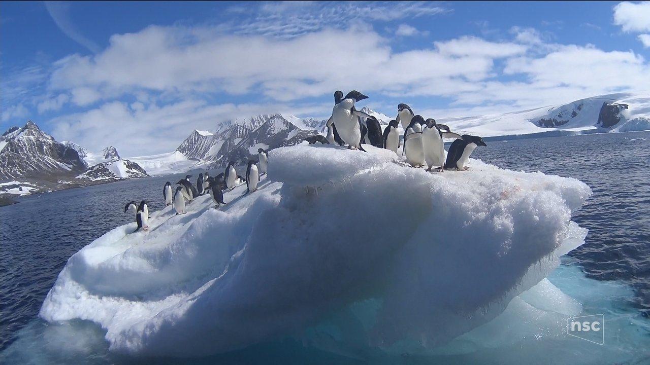 Confira o segundo episódio da expedição de pesquisadores de SC à Antártida