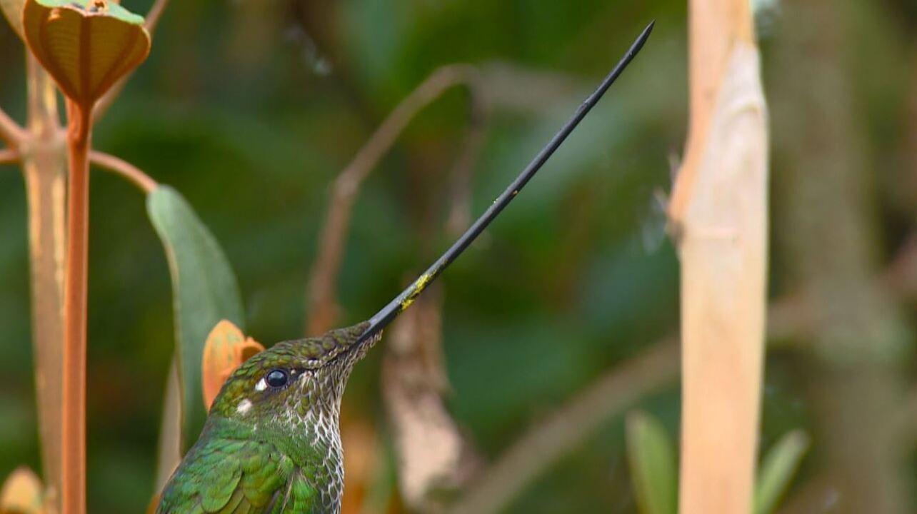 Aves diferentes e raras da Colômbia