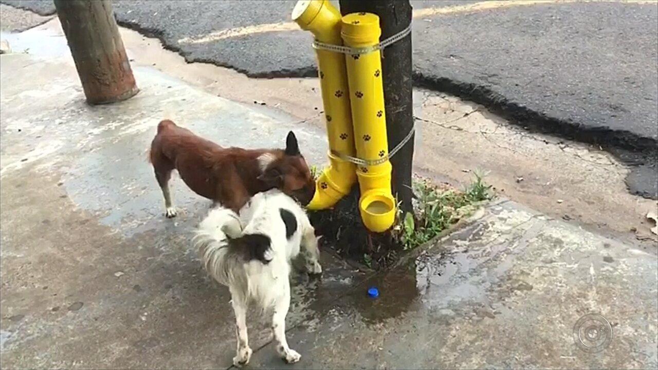 Comerciante alimenta animais de ruas com comedouro improvisado em Rio Preto