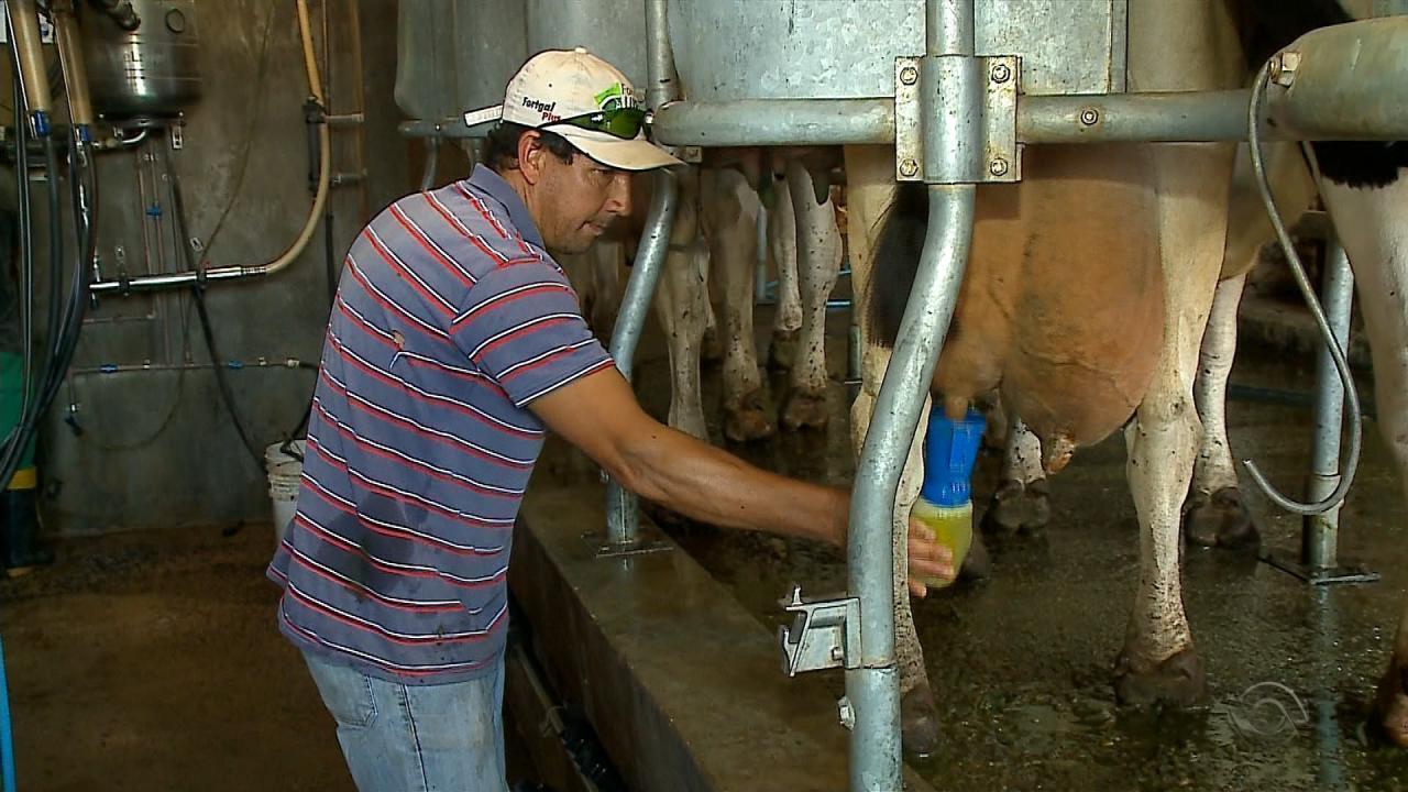 Quase 25 mil produtores abandonam atividade leiteira no RS em um ano, diz Emater