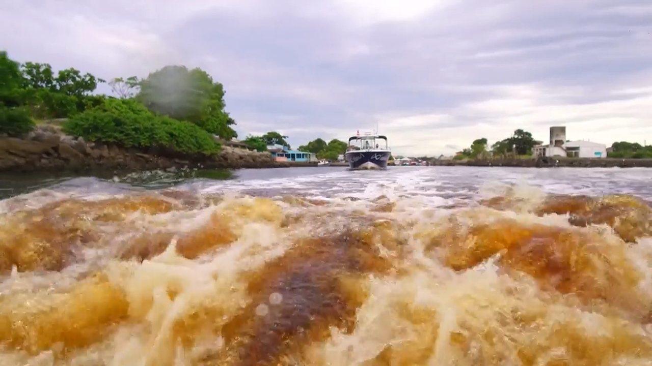 Neste sábado (3), você vai conhecer a riqueza da vida marítima do Paraná