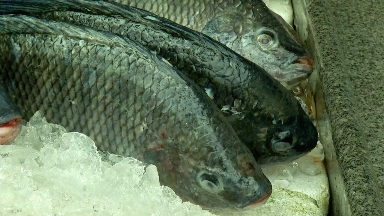 Oportunidade de mercado está na criação de tilápias em Macaé, no RJ