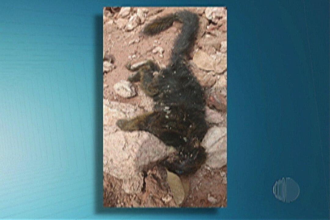 Dois macacos são encontrados mortos em Mogi das Cruzes