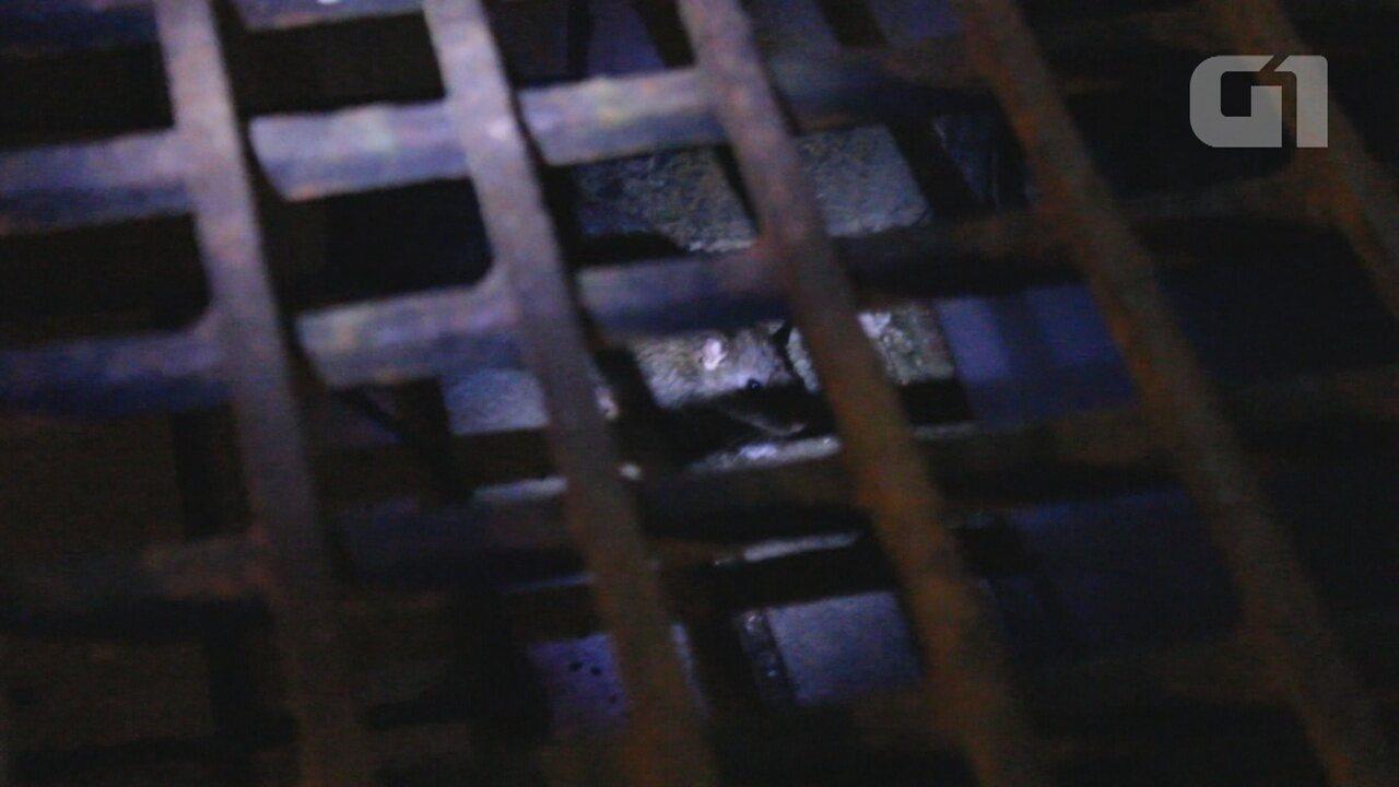 Vídeo mostra ratos circulando dentro de presídio feminino, em RO
