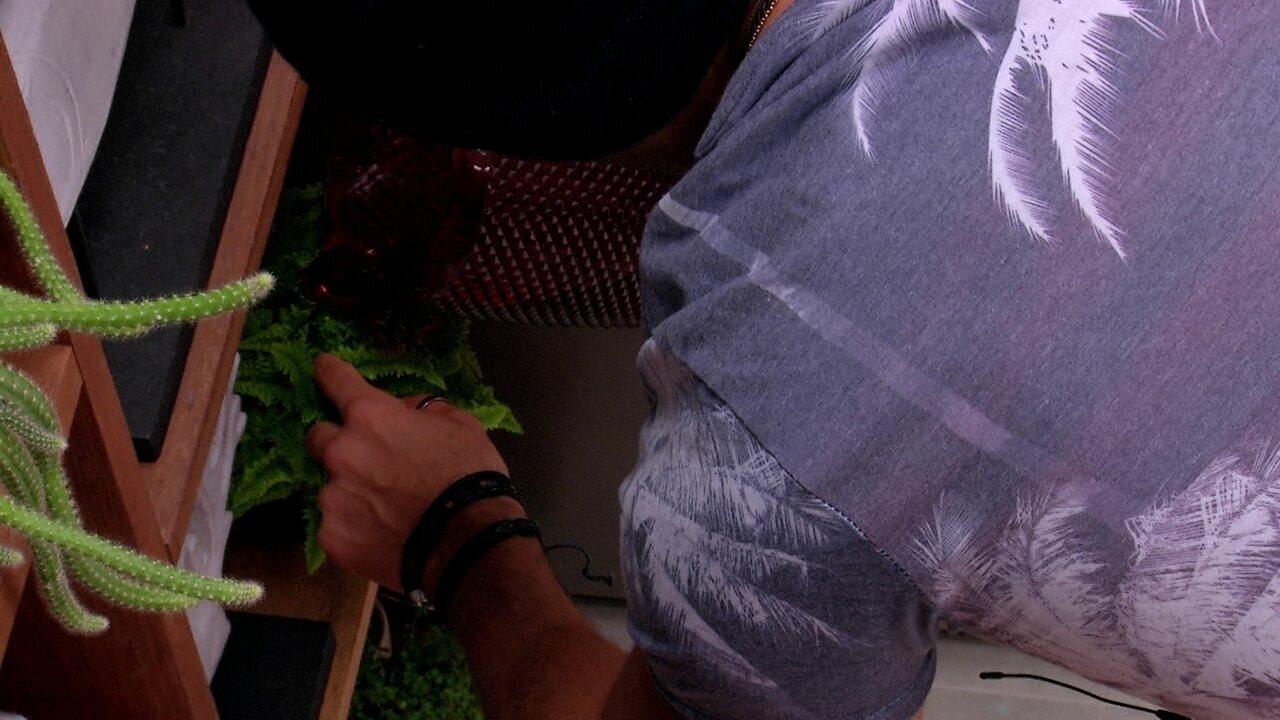 Kaysar rega plantas da cozinha