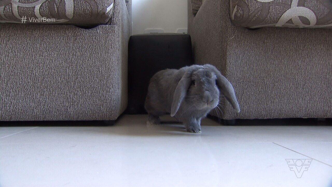 Vendas de coelhos cresceram 30% no período de Páscoa