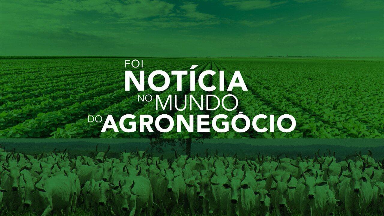 Confira o que foi notícia no mundo do agronegócio no Maranhão