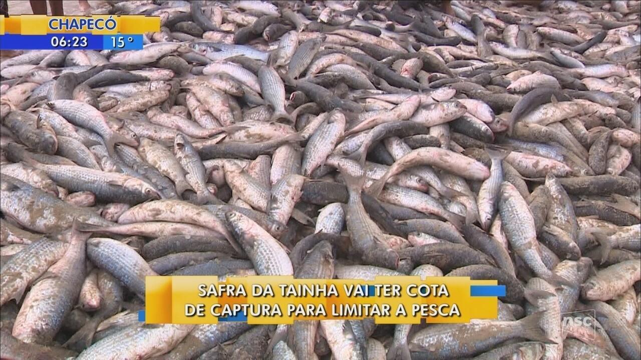 Safra da tainha deve ter cota de captura para limitar pesca