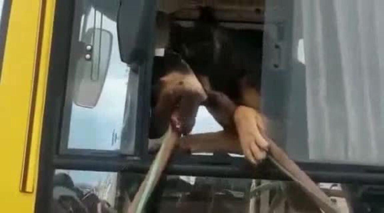 Cão enfurecido é retirado de ônibus no DF após atacar funcionários de empresa de transporte