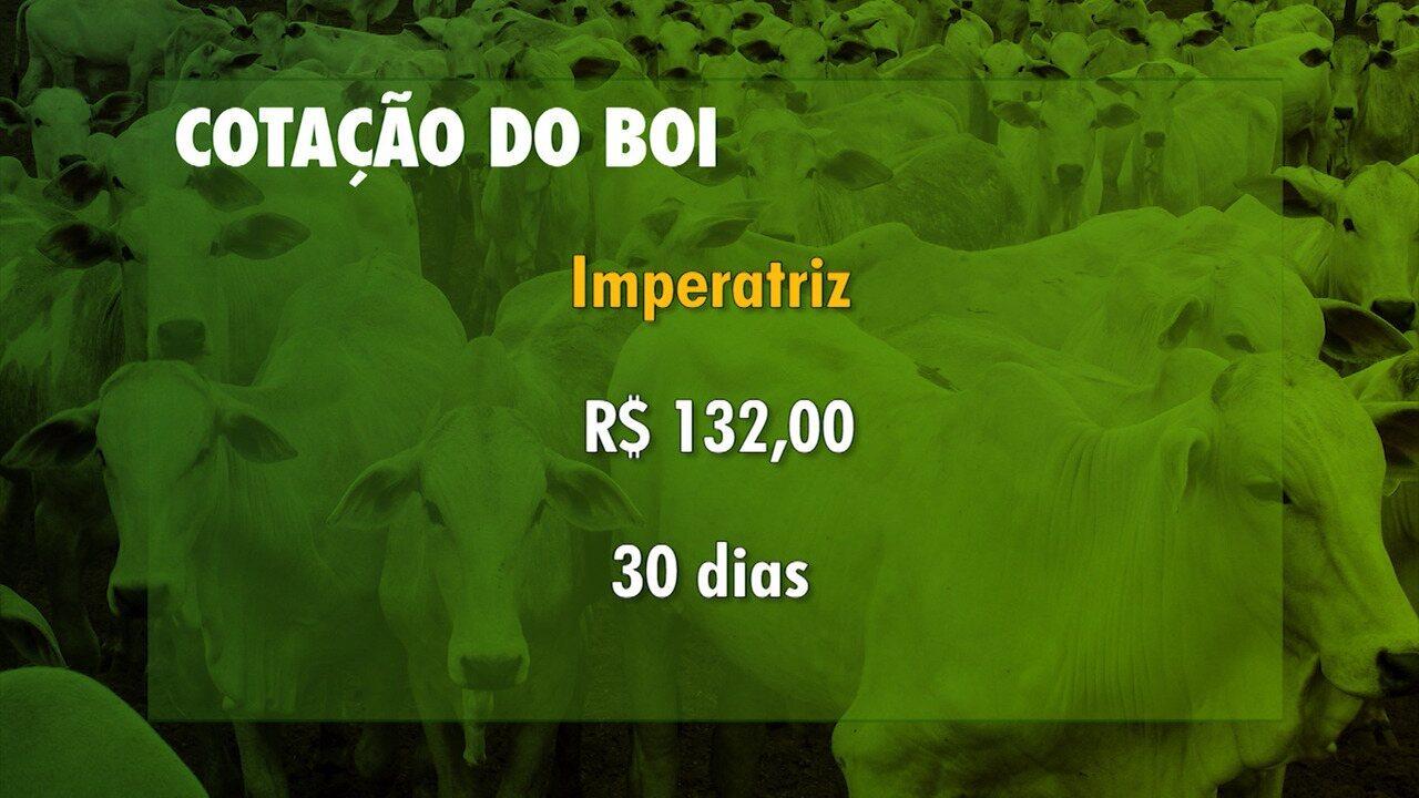 Veja a cotação do boi gordo no Maranhão