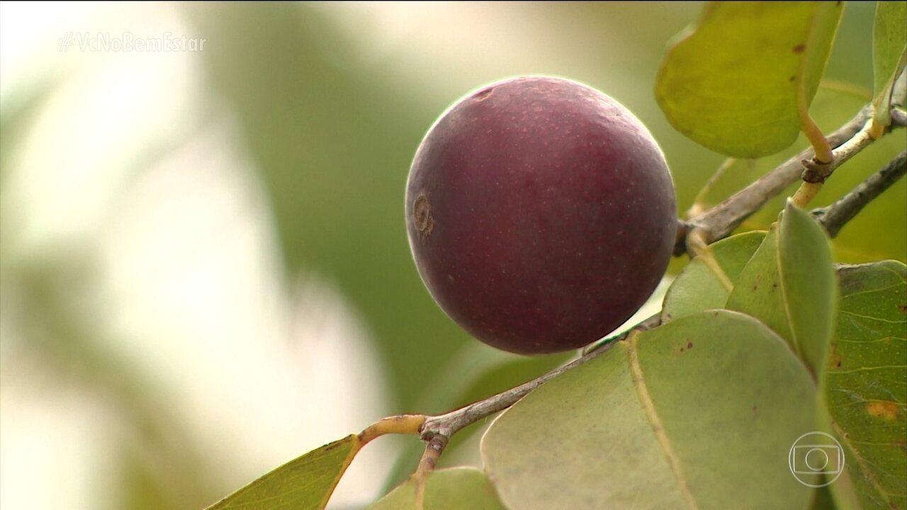 Resultado de imagem para Frutas nativas trazem novas fontes nutricionais para a dieta